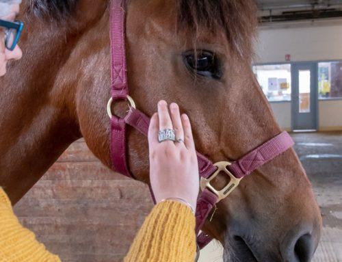 Equithérapie : quand le cheval soigne au CH Laborit
