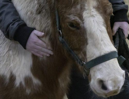 La thérapie assistée par le cheval au CH Laborit